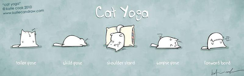 Cook-cat-yoga-4web
